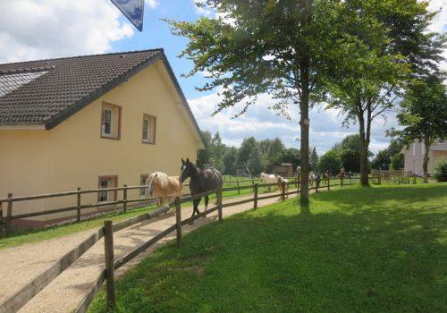 Hof-Pferde